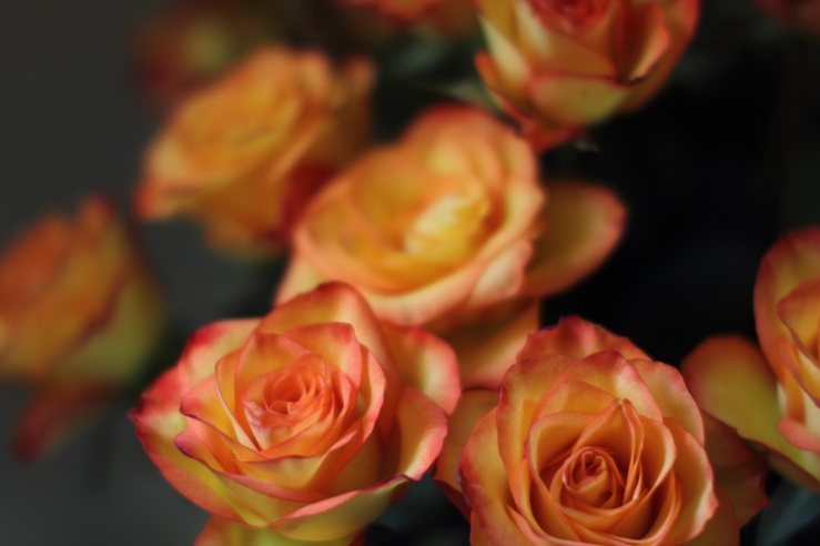 Lake Naivasha Roses